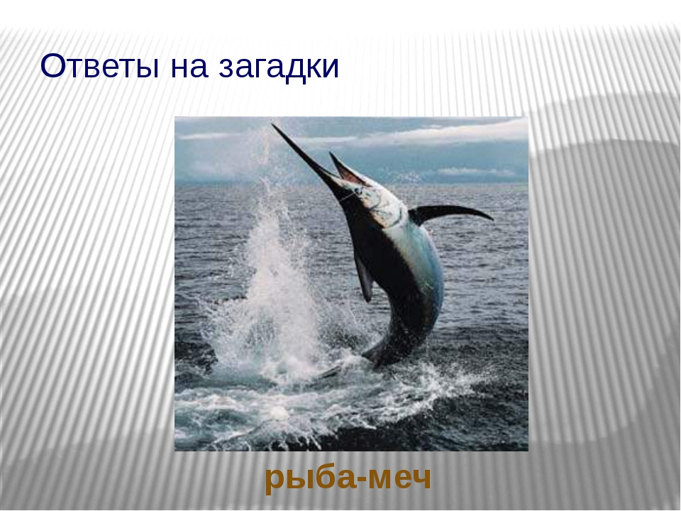 Ответы на загадки рыба-меч