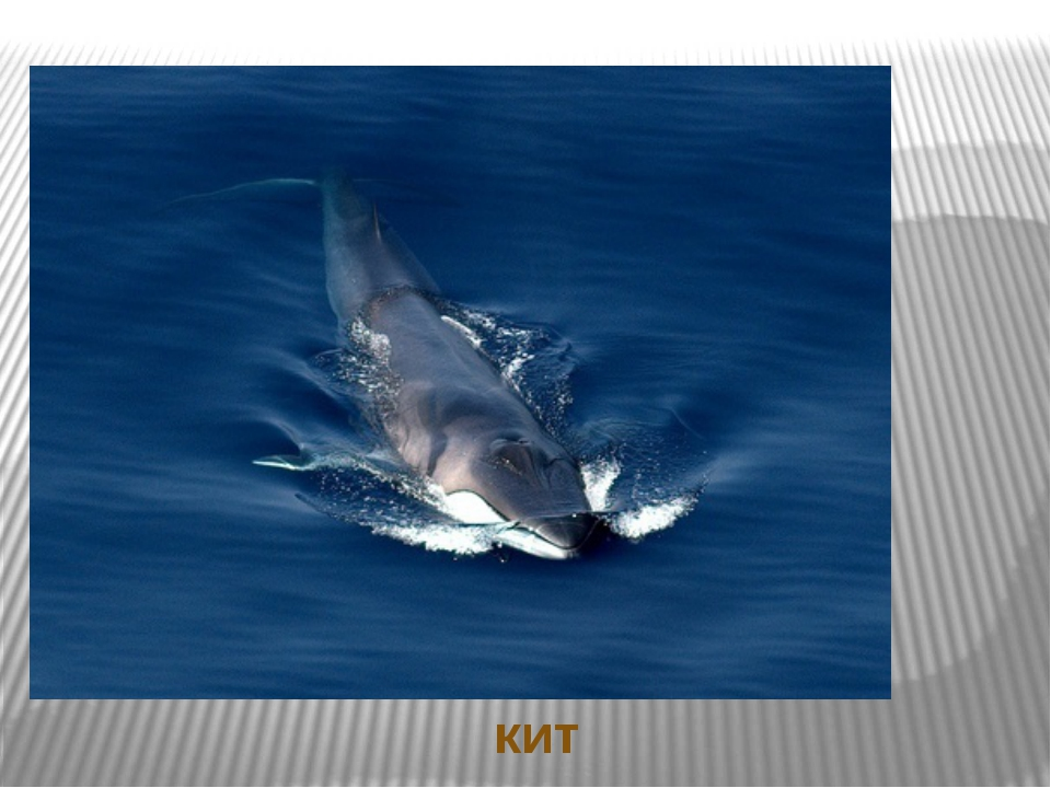 Ответы на загадки кит