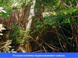 Остатки плотины подпитывающего канала.
