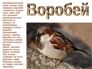 Воробей-маленькая серая птичка. Само название «воробей» сложилось из двух сло