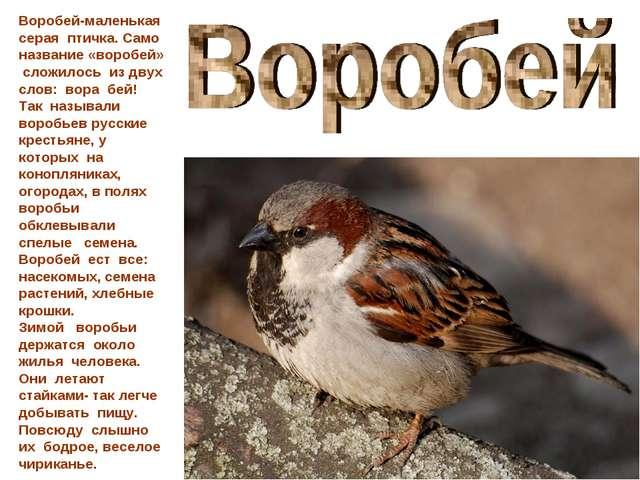 Воробей-маленькая серая птичка. Само название «воробей» сложилось из двух сло...