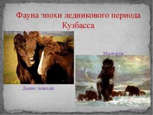 Фауна эпохи ледникового периода Кузбасса Мамонты Дикие лошади