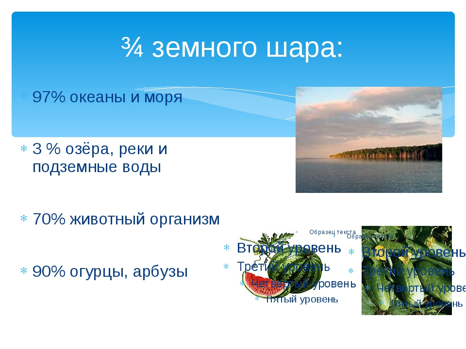 ¾ земного шара: 97% океаны и моря 3 % озёра, реки и подземные воды 70% животн...