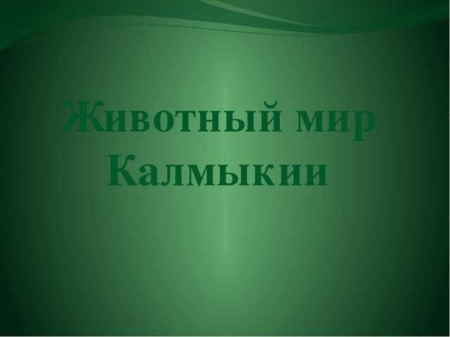 Животный мир Калмыкии
