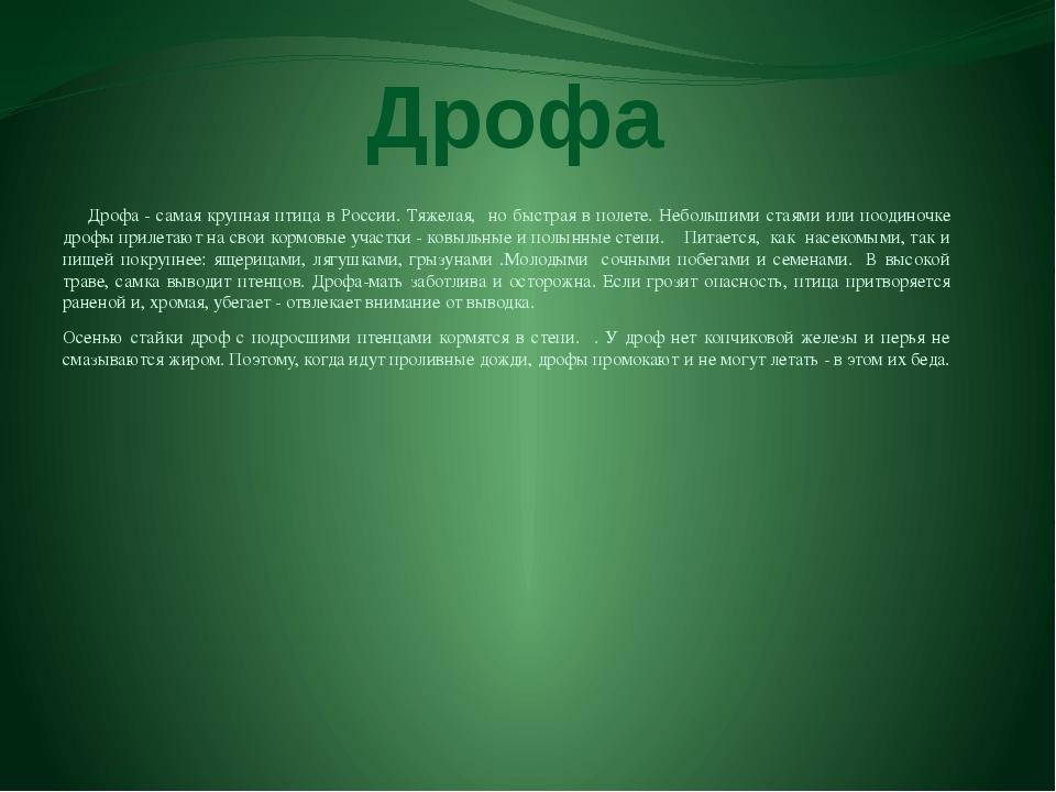 Дрофа Дрофа - самая крупная птица в России. Тяжелая, но быстрая в полете. Неб...