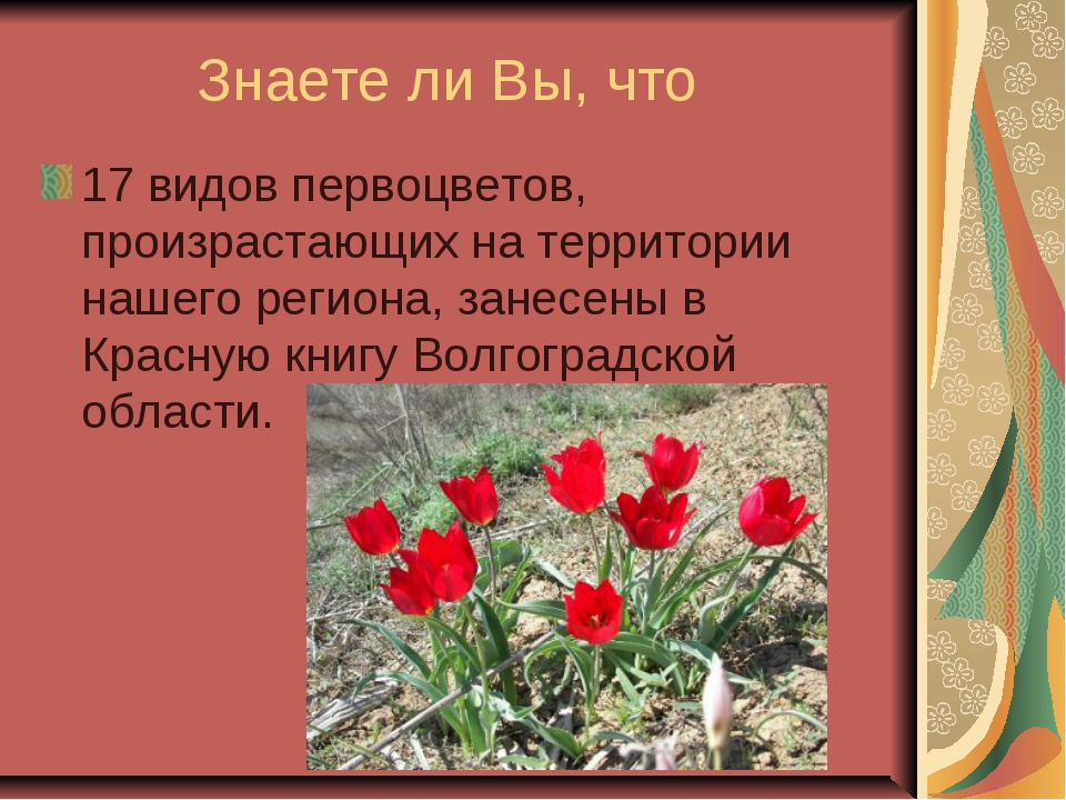 Знаете ли Вы, что 17 видов первоцветов, произрастающих на территории нашего...