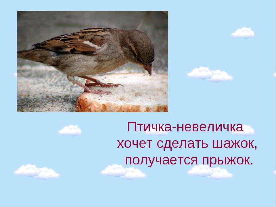 Птичка-невеличка хочет сделать шажок, получается прыжок.
