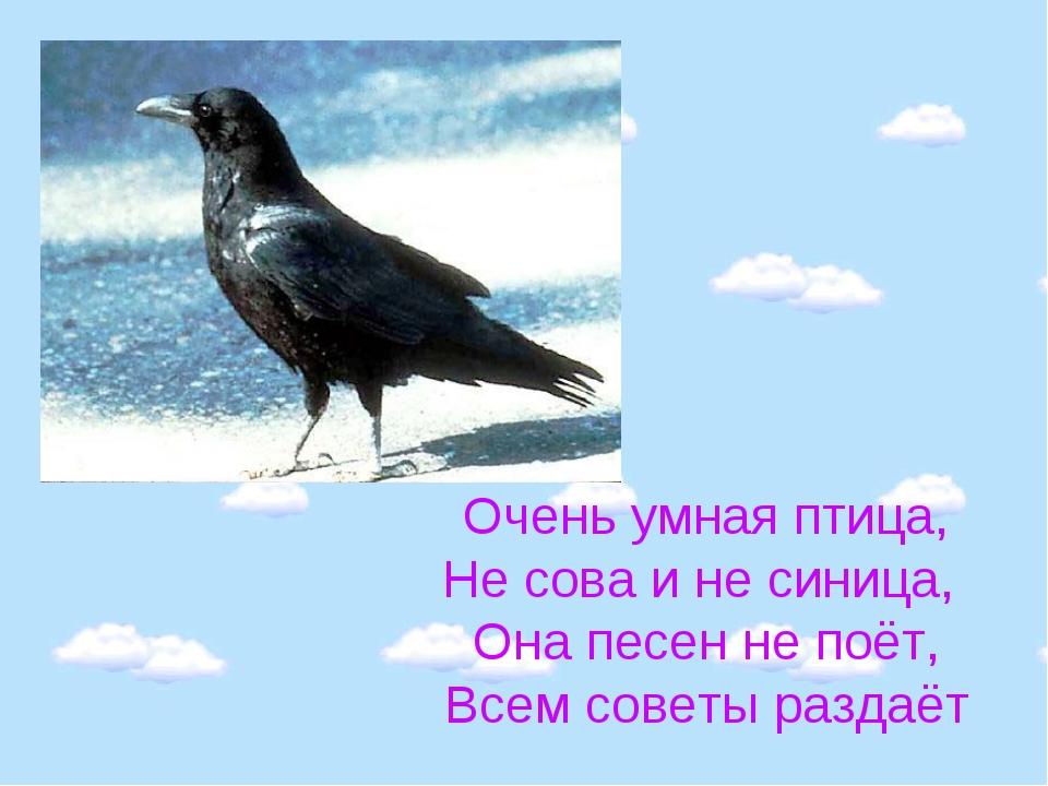 Очень умная птица, Не сова и не синица, Она песен не поёт, Всем советы раздаёт