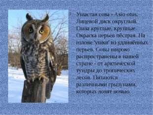 Ушастая сова - Asio otus. Лицевой диск округлый. Глаза круглые, крупные. Окр