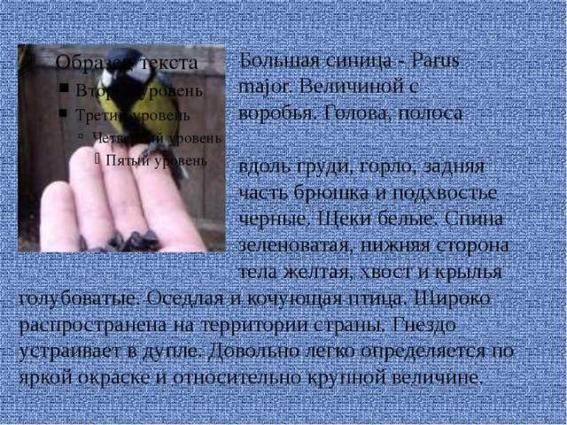 Большая синица - Parus major. Величиной с воробья. Голова, полоса вдоль груд...