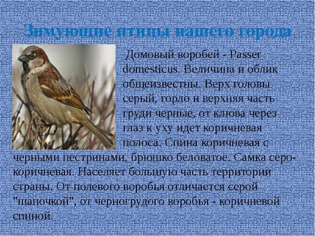 Зимующие птицы нашего города Домовый воробей - Passer domesticus. Величина и...