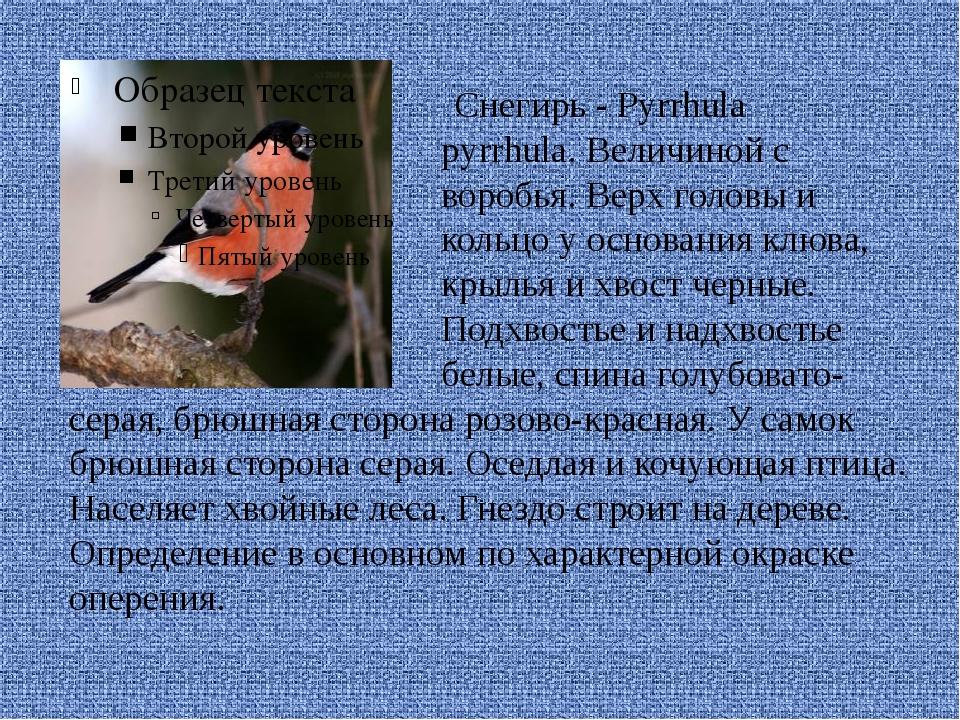 Снегирь - Pyrrhula pyrrhula. Величиной с воробья. Верх головы и кольцо у осн...