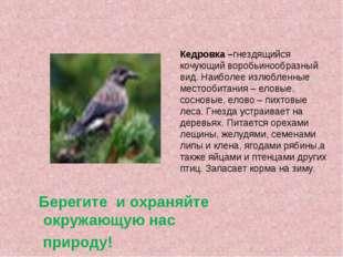 Кедровка –гнездящийся кочующий воробьинообразный вид. Наиболее излюбленные ме