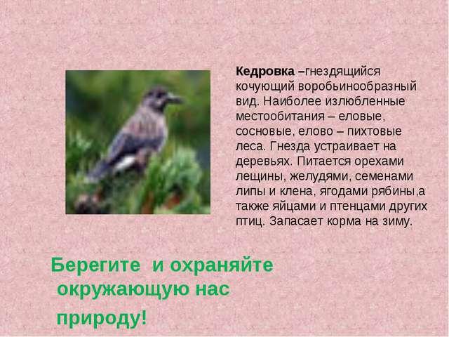 Кедровка –гнездящийся кочующий воробьинообразный вид. Наиболее излюбленные ме...
