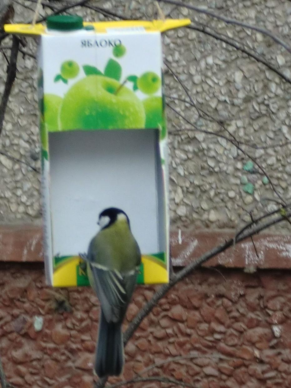 E:\Мои документы\Начальная школа\през покормите птиц\Изображение 003.jpg