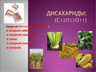 Сахароза(обычный пищевой сахар): в сахарной свёкле; в сахарном тростнике; в