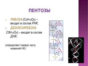 РИБОЗА (С5Н10О5) – входит в состав РНК; ДЕЗОКСИРЕБОЗА С5Н10О4) – входит в сос