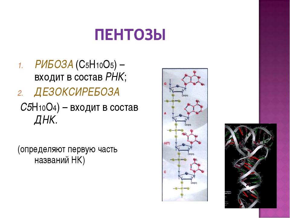 РИБОЗА (С5Н10О5) – входит в состав РНК; ДЕЗОКСИРЕБОЗА С5Н10О4) – входит в сос...