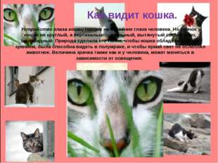 Как видит кошка. Устройство глаза кошки похоже на строение глаза человека. Н