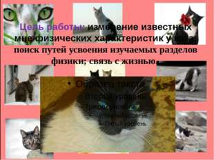 Цель работы: измерение известных мне физических характеристик у кота; поиск п