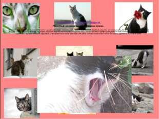 Механика в жизни кошки. Простые механизмы в анатомии кошки. В скелете этого