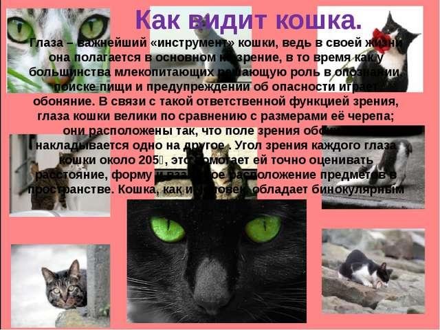Как видит кошка. Глаза – важнейший «инструмент» кошки, ведь в своей жизни он...