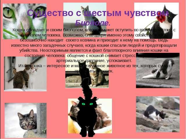 Существо с шестым чувством Биополе. Кошка обладает и своим биополем, которое...