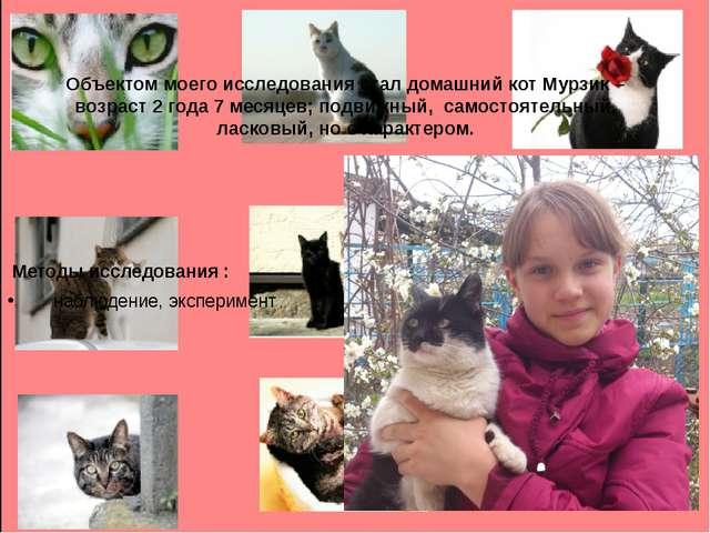 Объектом моего исследования стал домашний кот Мурзик – возраст 2 года 7 месяц...