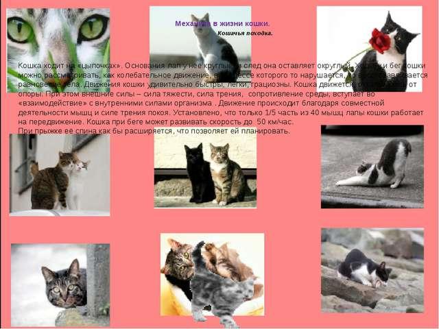 Механика в жизни кошки. Кошачья походка. Кошка ходит на «цыпочках». Основани...
