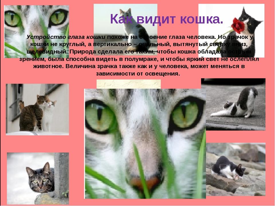 Как видит кошка. Устройство глаза кошки похоже на строение глаза человека. Н...