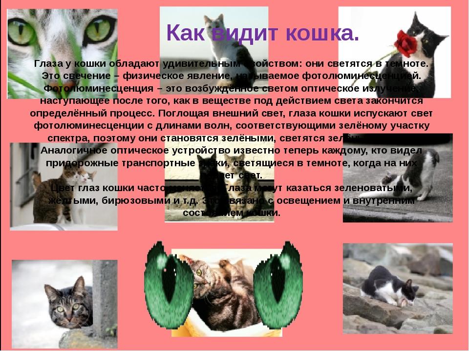 Как видит кошка. Глаза у кошки обладают удивительным свойством: они светятся...