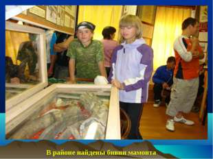 Тиман-3\08797.jpg В районе найдены бивни мамонта