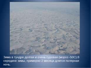 Зима в тундре долгая и очень суровая (мороз -50С).В середине зимы, примерно 2