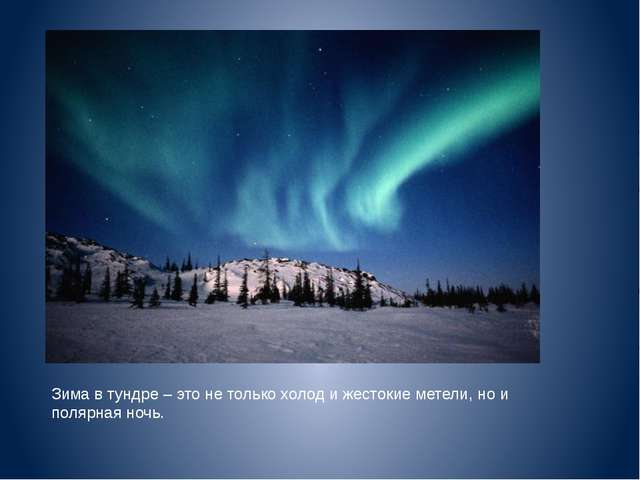 Зима в тундре – это не только холод и жестокие метели, но и полярная ночь.