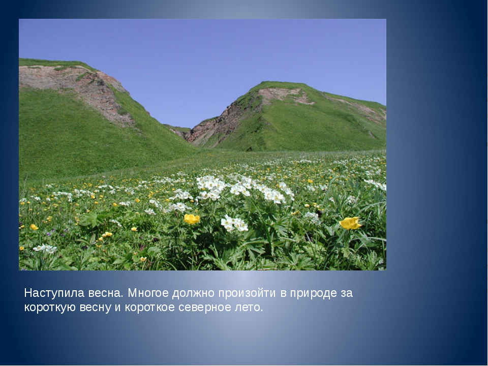 Наступила весна. Многое должно произойти в природе за короткую весну и коротк...
