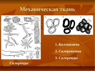 Механическая ткань Склереиды Колленхима Склеренхима Склереиды