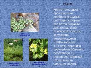 Кроме того, здесь произрастают прибрежно-водные растения, которые являются ре