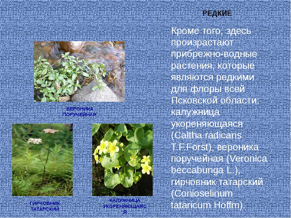 Кроме того, здесь произрастают прибрежно-водные растения, которые являются ре...