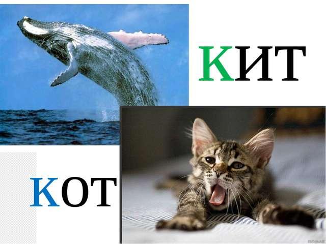 кит кот