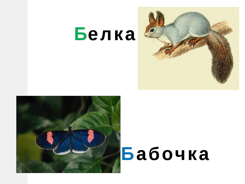 Белка Бабочка