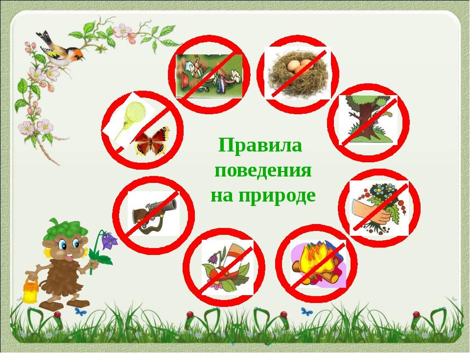 Правила поведения на природе
