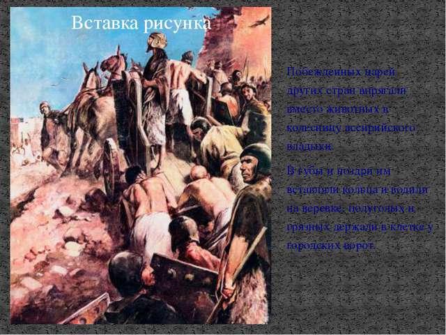 Побежденных царей других стран впрягали вместо животных в колесницу ассирийск...