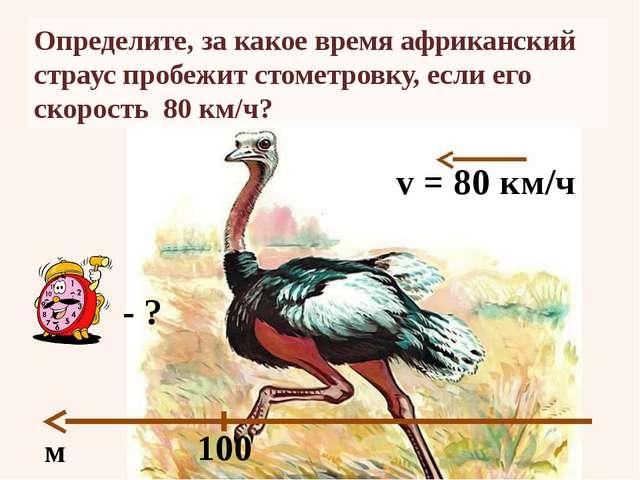 Определите, за какое время африканский страус пробежит стометровку, если его...