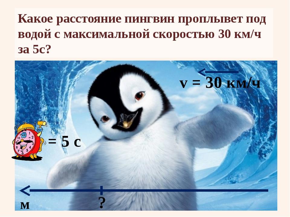 Какое расстояние пингвин проплывет под водой с максимальной скоростью 30 км/ч...