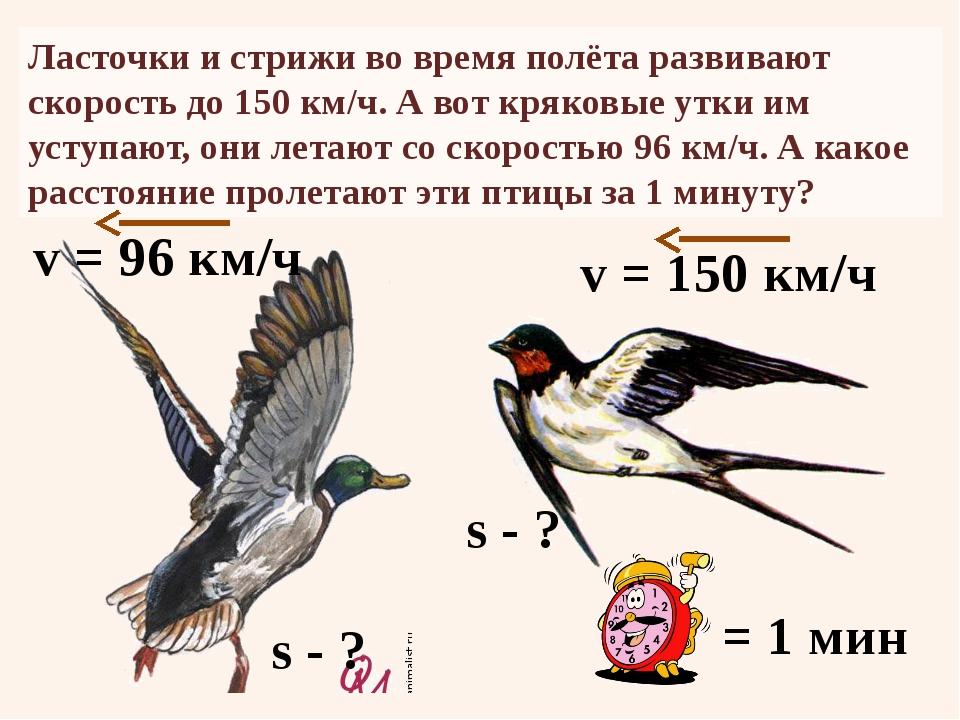 Ласточки и стрижи во время полёта развивают скорость до 150 км/ч. А вот кряко...