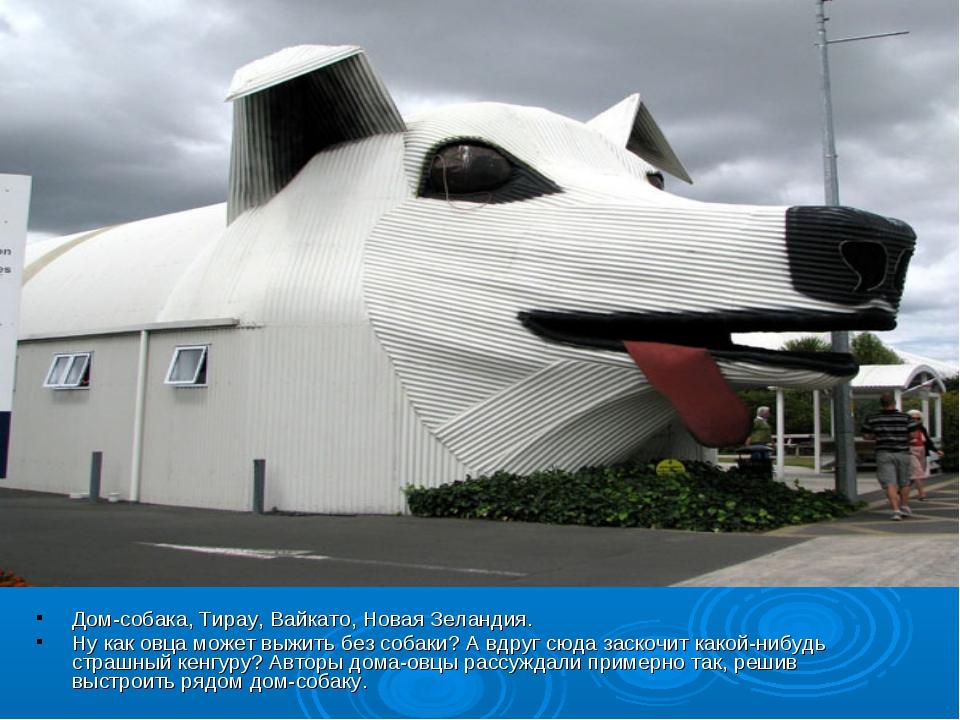 Дом-собака, Тирау, Вайкато, Новая Зеландия. Ну как овца может выжить без соба...