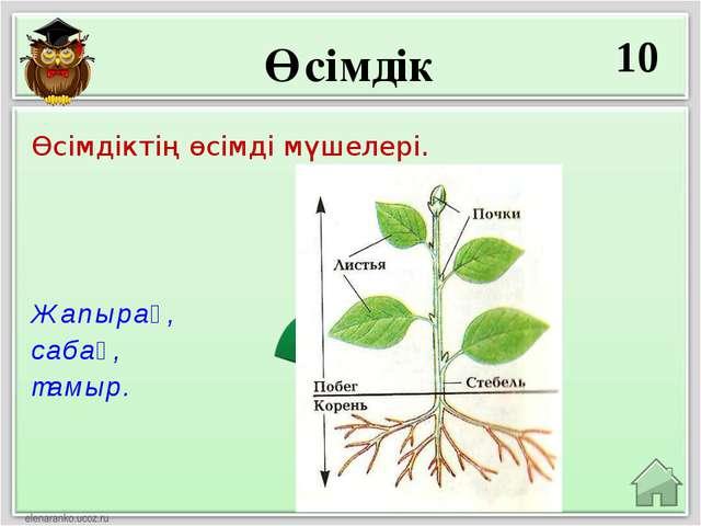 Өсімдік 10 Жапырақ, сабақ, тамыр. Өсімдіктің өсімді мүшелері.
