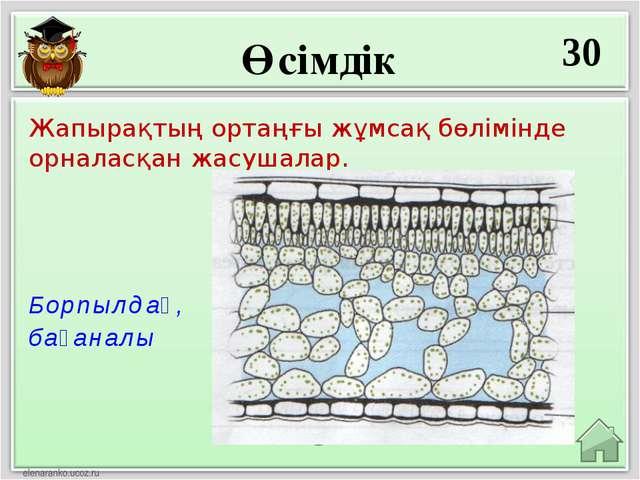 Өсімдік 30 Борпылдақ, бағаналы Жапырақтың ортаңғы жұмсақ бөлімінде орналасқан...