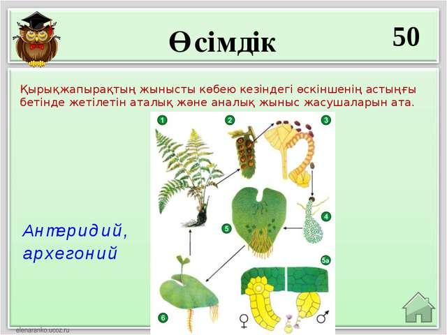 Өсімдік 50 Антеридий, архегоний Қырықжапырақтың жынысты көбею кезіндегі өскін...