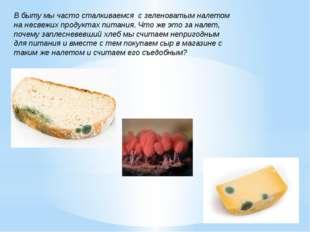 В быту мы часто сталкиваемся с зеленоватым налетом на несвежих продуктах пита